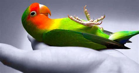 love your pet benefits of owning a pet bird bucktons