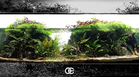 Ultimate Soil Aquascape 10 best images about aquascape on nature java and plants