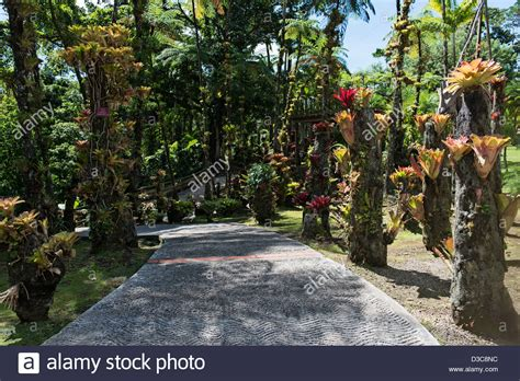 Jardin Botanical Gardens Botanical Garden Of Balata Jardin De Balata Martinique