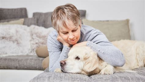 how to make your an emotional support how to make my an emotional support esa certification