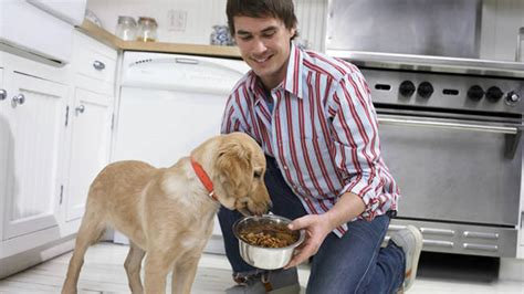 dogs in care finding pet care care