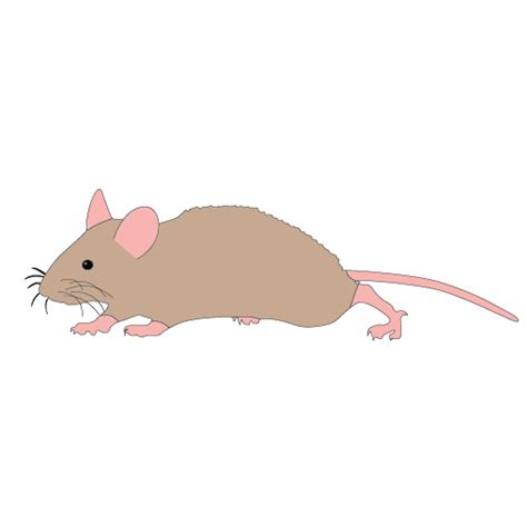 Mouse Clipart by Mice Clipart Easy Animal Pencil And In Color Mice