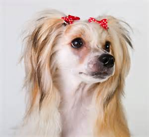 haircut ideas for hair dogs funky funny dog hairstyle