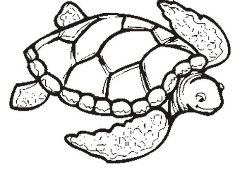 Sea Turtle Coloring Pages Coloring Home Turtle Coloring Pages