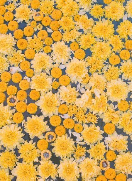 yellow pattern tumblr yellow flowers on tumblr