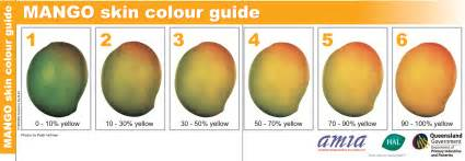 what color is a mango mango postharvest agriculture
