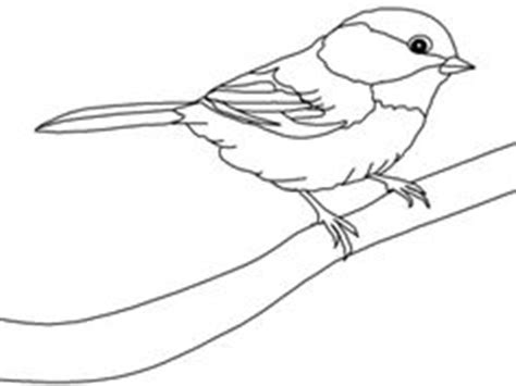 tody bird coloring page bird drawings drawing of black capped chickadee from