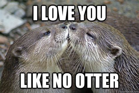 Otter Love Meme - i love you like no otter i love you like no otter