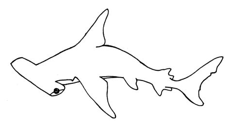 coloring page of a hammerhead shark hammerhead shark coloring pages how to draw hammerhead
