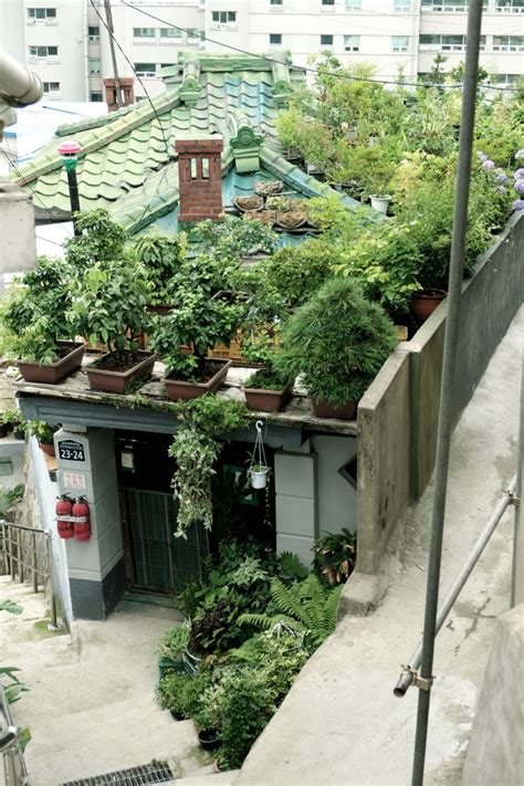 Dong Garden by Green Roof Garden Gardens Green Roofs And