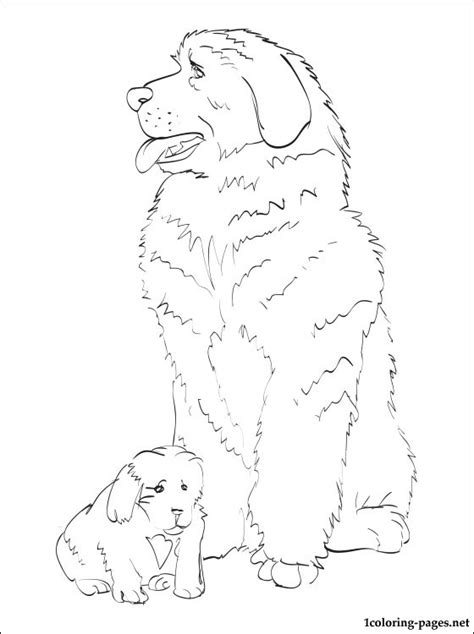 coloring pages of newfoundland newfoundland coloring page coloring pages
