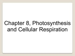 chapter 8 photosynthesis section review 8 1 photosynthesis