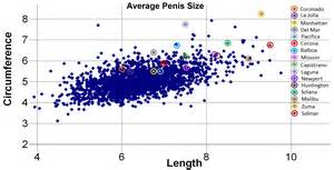 average size penis comparison picture