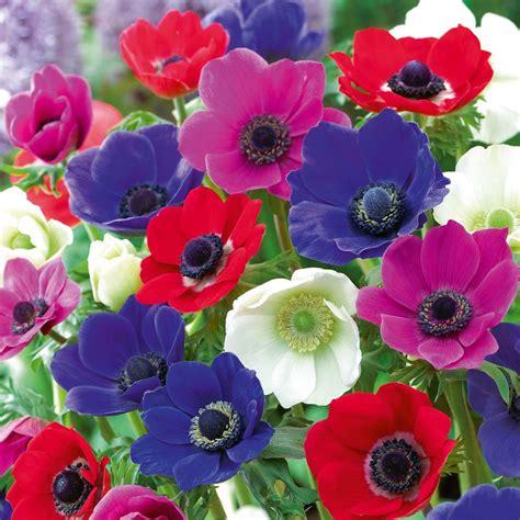 fiori pavia fioraio poggi pavia in un click