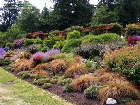pacific northwest gardening outcropping advice sought 1