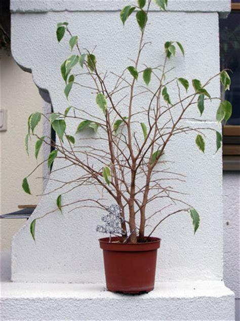 blumen und garten 2473 lieblingspflanzen chocohasiwollte mal rumfragen was so