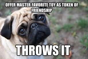 Dog Problems Meme - the funniest first world dog problems memes
