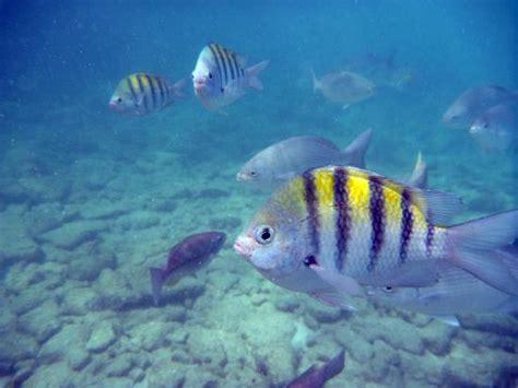 Termurah Fish All Ph Up fish picture of baby san nicolas tripadvisor