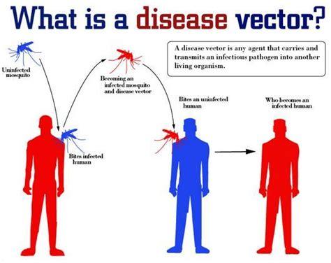 imagenes de vectores transmisores de enfermedades lista de enfermedades trasmitidas por vectores