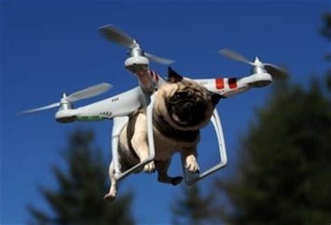 pug drone pug drone photo by themarti photobucket