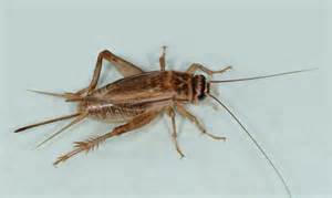 target pest control house crickets