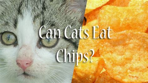 can dogs eat tortilla chips can cats eat chips pet consider