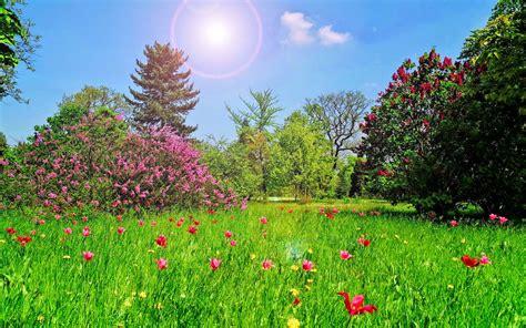 bloemen achter zomer wallpaper met gras en bloemen achtergronden
