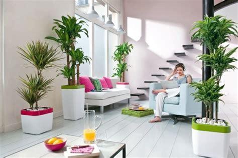 jenis tanaman pembawa keberuntungan bagi pemilik rumah
