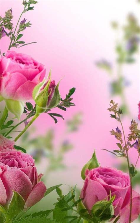 20 im 225 genes de rosas rojas hermosas para descargar gratis fondos de pantalla de rosas fondos de pantalla fondos de