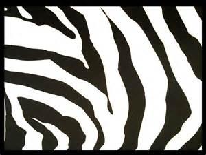 zebra template someday baby pink zebra nails