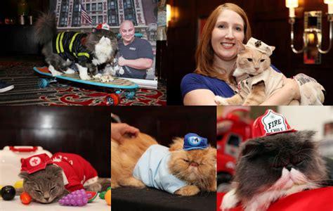 Best Baju Kostum Pakaian Anjing Kucing Hewan Peliharaan Premium 1 lucunya kucing didandani untuk fashion show matilda di new