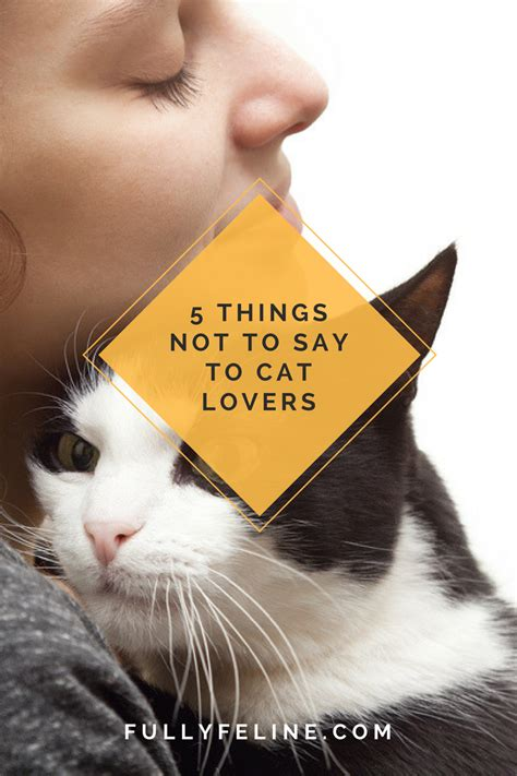 warning 5 things not to say to cat owners fully feline
