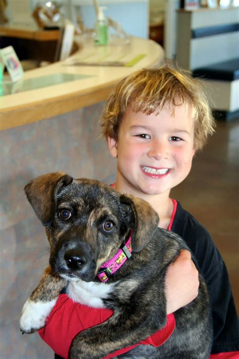 new puppy care new puppy information animal care clinic