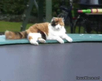 cat trampoline gif find & share on giphy
