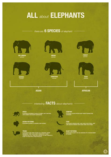 libro infographics animal kingdom zoo animal infographic posters on behance
