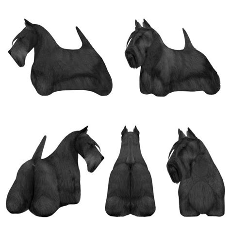 different ways to groom a scottish terrier 292 best owned by a scottie images on pinterest