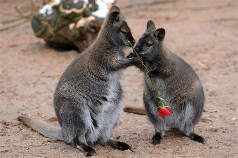 valentines animals gifting squee