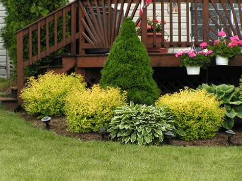 Shrub Garden Ideas I This Landscaping I Grow The Goldmount Spiraeas In With My Shrubs Around The House They
