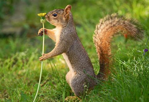 squirrel images all about animal wildlife squirrels photos and facts