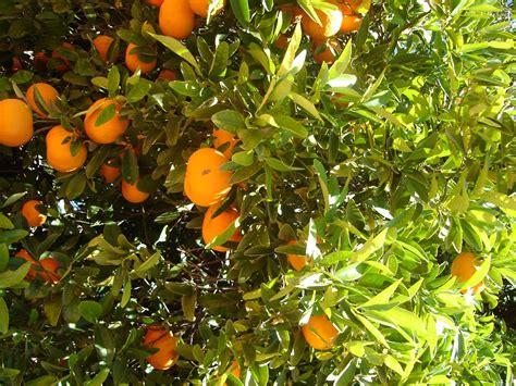 beautiful fruit trees desktop wallpapers animals wallpapers flowers wallpapers