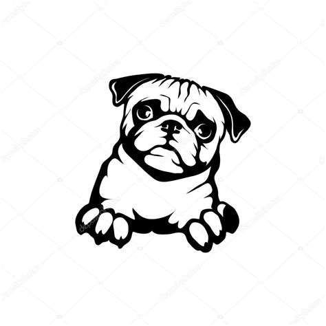 what does pug stand for pug logo stock vector 169 korniakovstock gmail 101580426