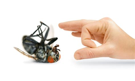 house pest control pest control helpful ways to know you re infested