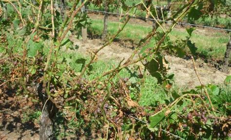 chambre d agriculture de gironde viticulture la chambre d agriculture de gironde
