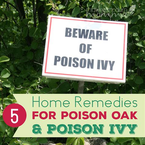 5 home remedies for poison oak poison midwest