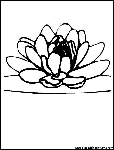 coloring pages of lotus flowers coloring pages for lotus flower coloring pages for
