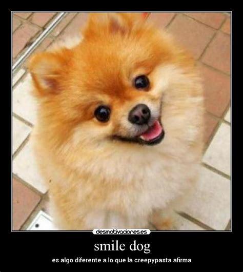 imagenes de smiledog jpg smile dog desmotivaciones