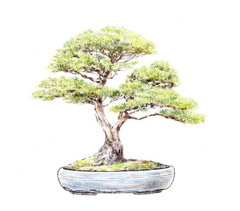 66 best images about bonsai drawing on bonsai trees tree drawings and dibujo the gallery for gt bonsai drawing