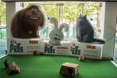 illumination entertainment  secret life  pets dd