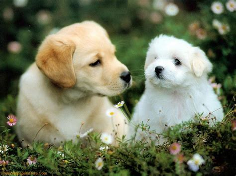 wallpaper dogs cute dogs and puppies wallpapers wallpaper cave