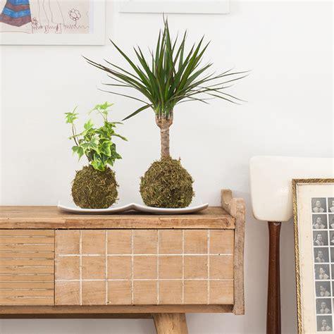 como decorar plantas con macetas kokedama la alternativa japonesa para decorar tu casa con